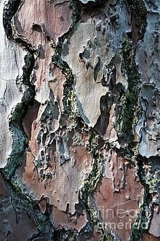 Lichen and Moss on a Tree 10 by Jean Bernard Roussilhe