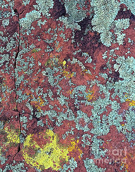 Lichen Colors by Todd Breitling