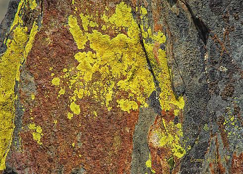 Donna Blackhall - Lichen Landscape