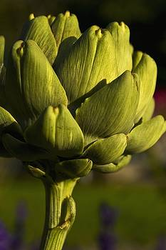 Life and Artichokes  by Dania Reichmuth