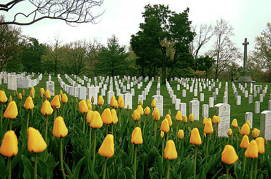 Life and Death at Arlington by Jame Hayes
