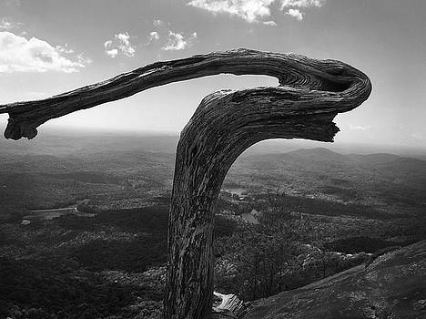 Lifeless Tree Atop Table Rock by Kelly Hazel