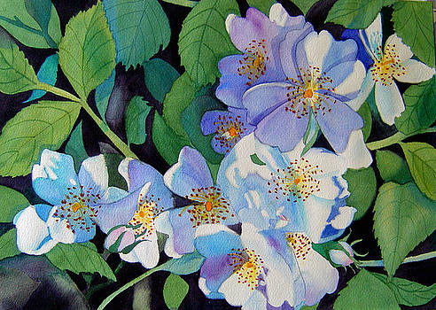 Light and Shadow - White Blossoms by Teresa Boston