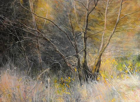 Harry Robertson - Light behind trees.