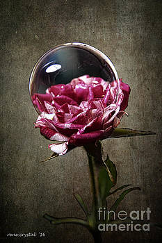 light, bubble, meet Rose by Rene Crystal
