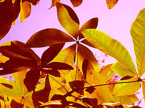 Amy Vangsgard - Light Coming Through Tree Leaves 1