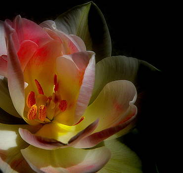 Light Flowers In The Darkness by Tanya Keefe