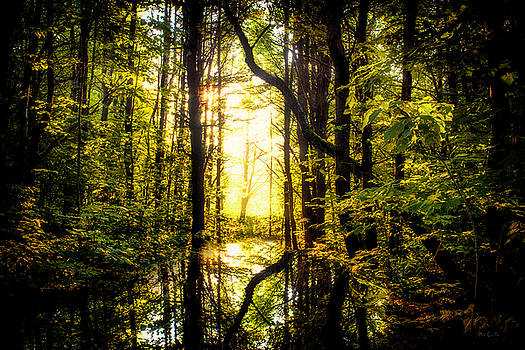 Light In The Forest by Bob Orsillo