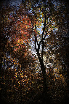 Light in the woods by Doug Hoover