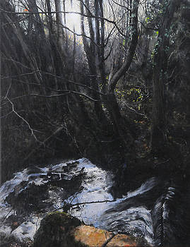 Light in the Woods by Harry Robertson