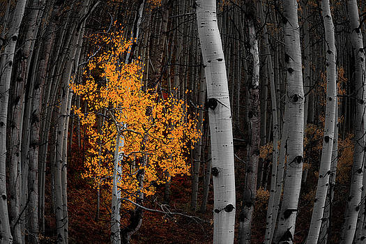Light of the Forest by Darren White