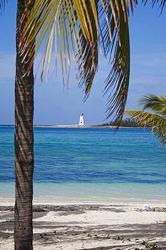 Lighthouse Under Palm by Joshua Francia