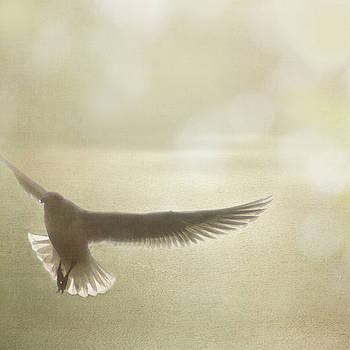 Lightness of Being by Sally Banfill
