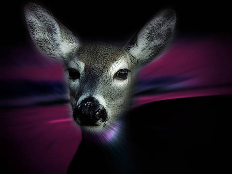 Like a Deer in the Headlights by Hunter Productions