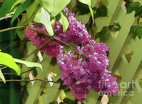Lilac Fence by Betsy Zimmerli