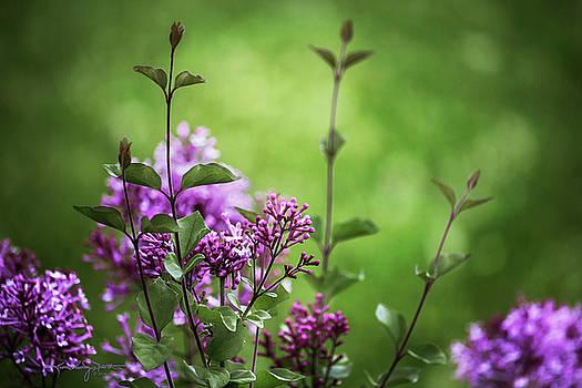 Lilac Memories by Karen Casey-Smith