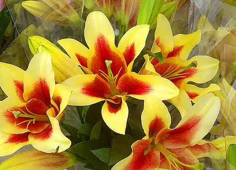 Amy Vangsgard - Lilies