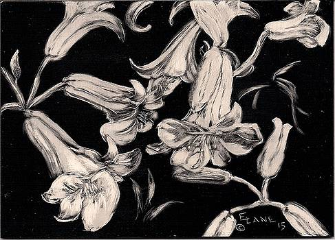 Lilies Black and White II by Elizabeth Lane