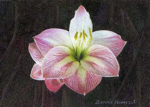 Lily ACEO by Bonnie Haversat