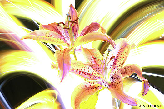 Lily Burst by Andrew Nourse