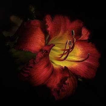 Julie Palencia - Lily in Red