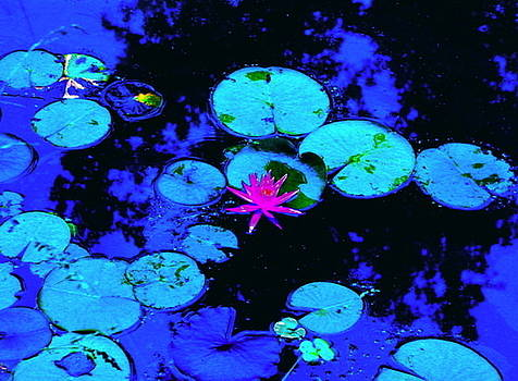 Lily Pads of Cobalt and Magenta by Cheryl Brumfield Knox