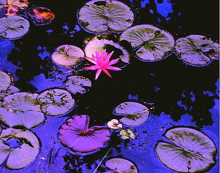Lily Pads of Purple and Pink by Cheryl Brumfield Knox