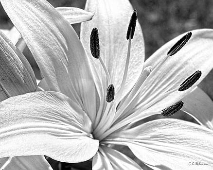 Christopher Holmes - Lily White - BW