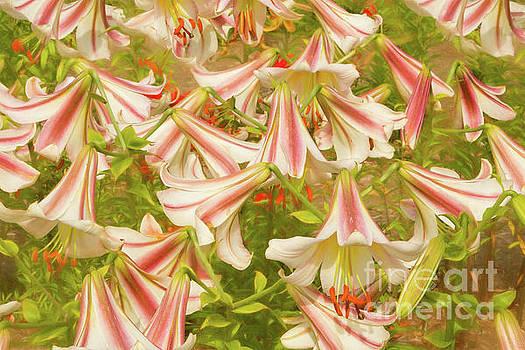 Lilycrest Patterns by Marilyn Cornwell