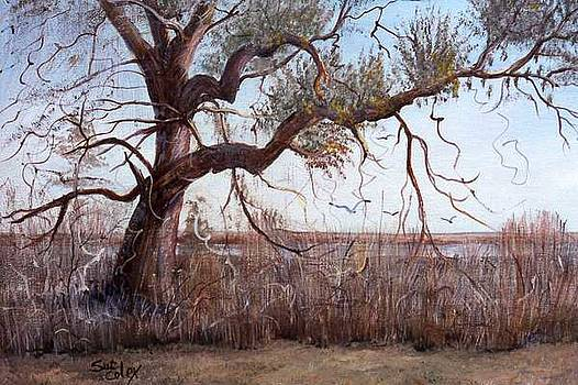 Limbs Reaching out by Sue Coley
