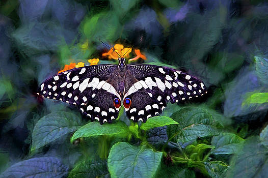 Lime Swallow Tail by James Steele