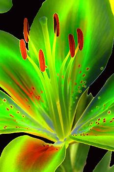 Lime Twist by Diane E Berry