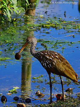 Barbara Bowen - Limpkin with an Apple Snail