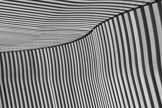 Lines by Zeljko Dozet