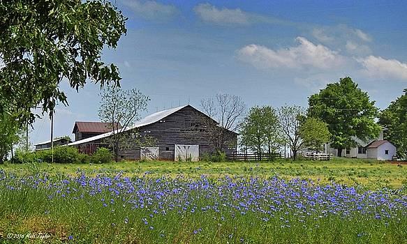 Linwood Farm Among Blue Cornflowers by Matt Taylor