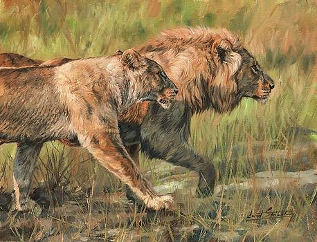 Lion and Lioness by David Stribbling