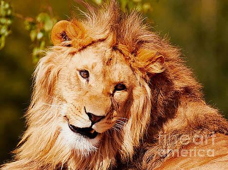 Nick  Biemans - Lion closeup