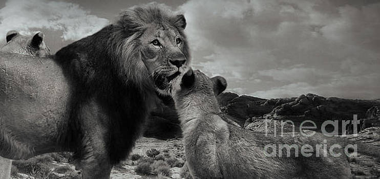 Lion family Panorama by Christine Sponchia