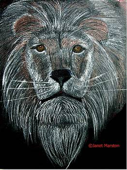 Lion Portrait by Janet Marston