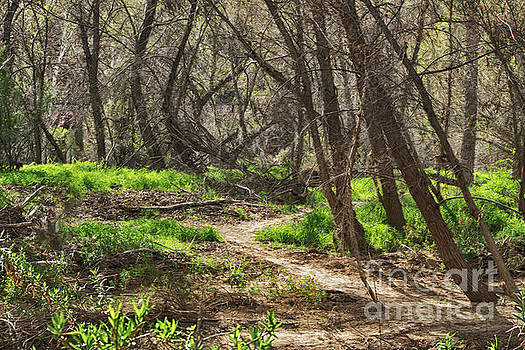 Lion Trail at Hassayampa Nature Reserve by Anne Rodkin