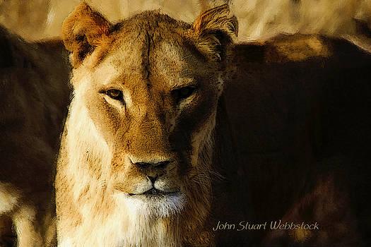 Lioness by John Stuart Webbstock