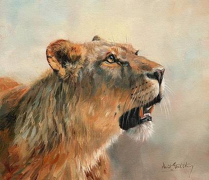 Lioness Portrait 2 by David Stribbling