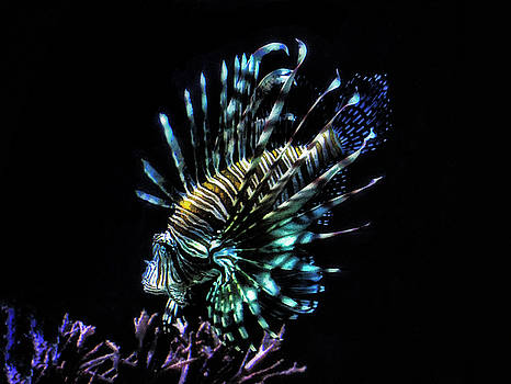 Lionfish swims by Ruth Jolly