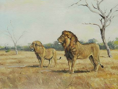 Lions of Satara by Robert Teeling