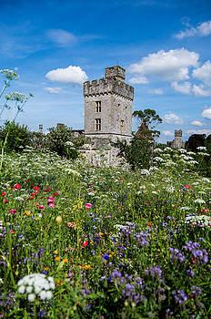 Martina Fagan - Lismore Castle Gardens