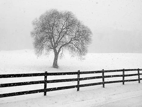 Listen The Snow Is Falling All Around by JK York