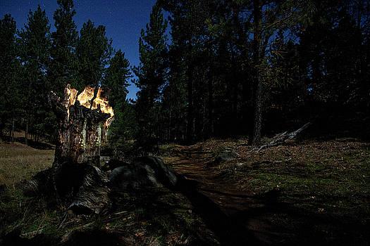Lit Stump Along the Trail by Scott Cunningham
