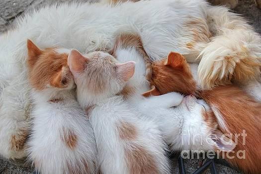 Little Balls of Fur by Vicki Spindler