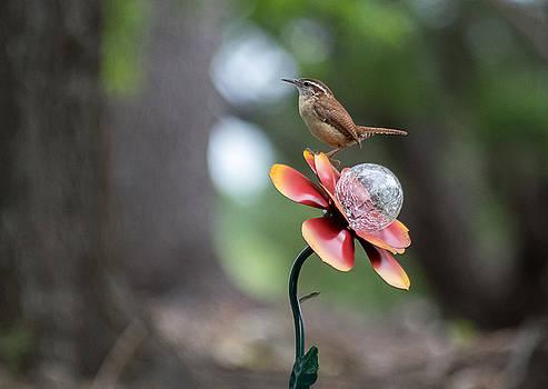 Little Bird by Bob Marquis