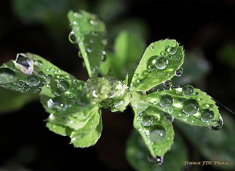 Little Diamond on Grass by Francoise Dugourd-Caput
